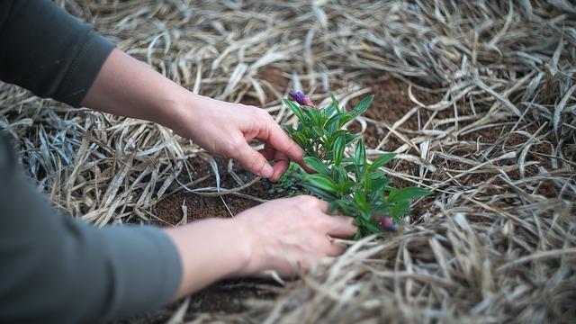 Kvalitní služby, které prospějí vaší zahradě